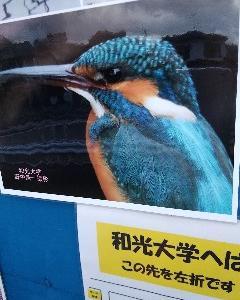 水鳥が遊んでる姿は見てるだけで楽しい😃💕