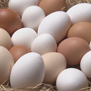 【NHK・あさイチ】卵の素朴な疑問を解決!卵の保存方法・選び方?