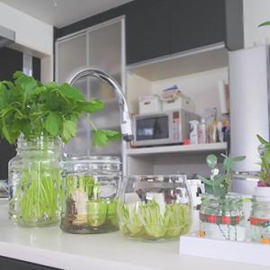 """【あさイチ】再生野菜の栽培方法""""野菜の切れ端""""からもう一度野菜を作る"""