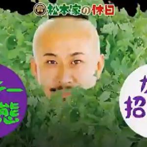 【松本家の休日】変態夫婦のパクチー革命!大阪おすすめパクチー専門店は台灣食堂