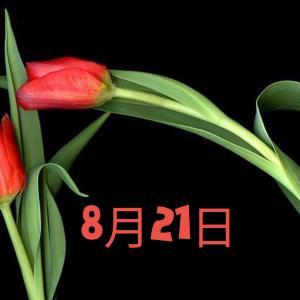 8月21日生まれの運勢・恋愛・性格を紹介【366日誕生日占い】