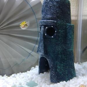 *海水魚*水槽立ち上げ中!