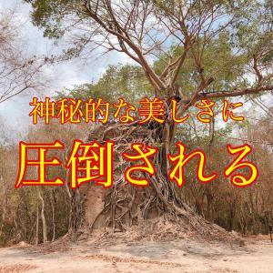 【カンボジア観光/世界遺産】〜神秘的な自然現象〜サンポープレイクック遺跡群