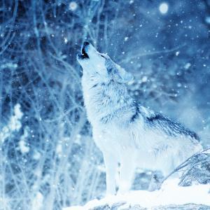 【HSP・価値観】一匹狼 ~負け犬?ぼっち?単に、群れたくないだけです~