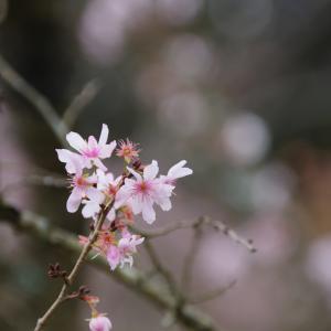 【車・趣味】今年最後の大旅行 ~十月桜と二度目のジェットフォイル~