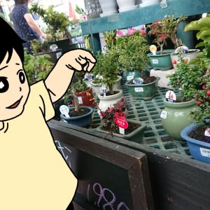 超初心者が家庭菜園に挑戦!夏野菜を植えてみた