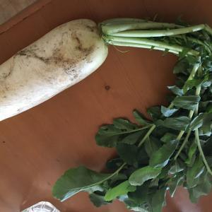 菜の花生協 みみずの会 野菜