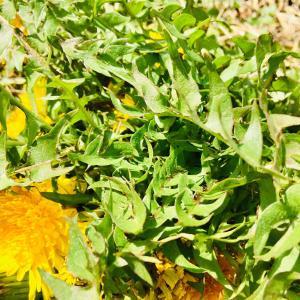 サバ味噌缶とタンポの葉のクリームパスタ