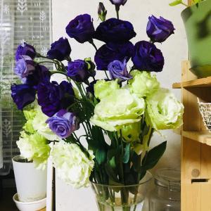 紫色と白を合わせたお花!
