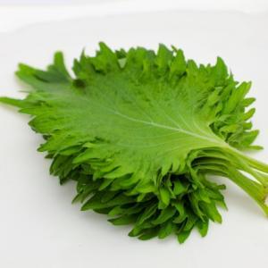 大葉の栄養価を知ろう。様々な料理のアクセントとしても合いますよね。