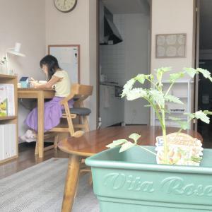 女の子の【おうち遊び】とはじめての【野菜作り】