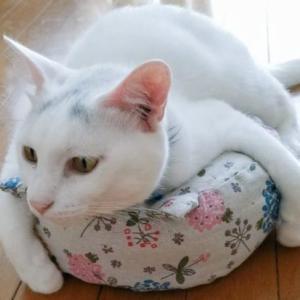 飼い猫の寿命は飼い主で決まる!愛猫といつまでも暮らすためには