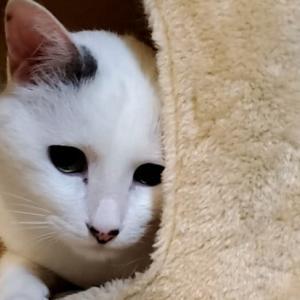 あなたは愛猫との暮らしを楽しんでいますか?居るだけで得られる効果
