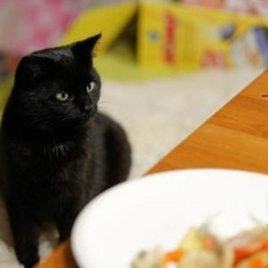 ちょっと待って!それ与えても大丈夫?愛猫と一緒に食べる夏の食べ物