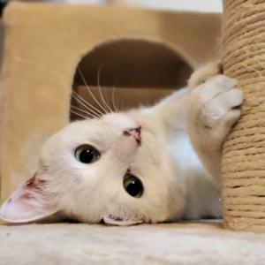 猫にだって好き嫌いがある⁉愛猫を苦手なものから守ってあげよう
