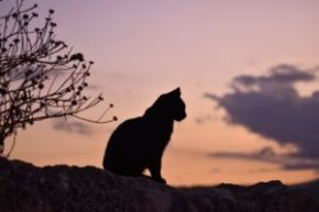 人間と暮らすと健康被害を受ける⁉愛猫に与える電磁波の影響とは