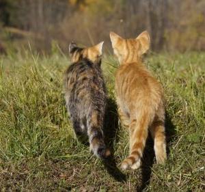 猫は離れ離れになった家族の事を覚えているのか?猫の記憶力について