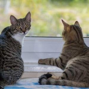 猫は何を基準にパートナーを選ぶの?モテる猫とモテない猫の違いとは