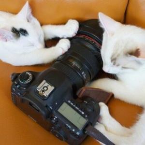 そんなに写真を撮らニャいで!猫がカメラを嫌う理由と慣れさせる方法