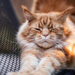 ビヨ~ンと長くなる猫の身体はどうなっているの?伸びる仕組みと心境