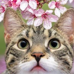 春だ!愛猫と一緒にお花見へGO!猫にとって桜は危険なの?