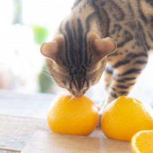 猫にとって危険なビタミンがある⁉水溶性ビタミンと脂溶性ビタミン