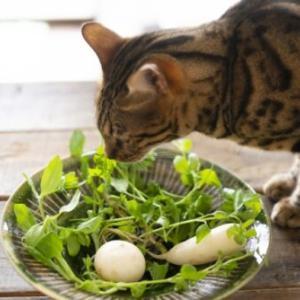 人がよく食べる野菜ベスト10!猫が食べてもいい野菜と危険な野菜