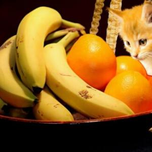 人がよく食べる果物ベスト10!猫が食べてもいい果物と危険な果物