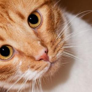 そんなに見つめないでくれニャー。愛猫とのアイコンタクトの取り方