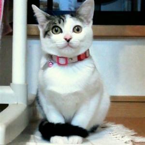 しっぽを巻きつけて寒いの?猫がしっぽマフラーをする時の気持ち