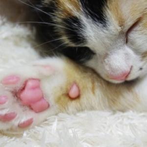 愛猫の肉球をチェック!肉球の色でわかる健康状態と性格診断