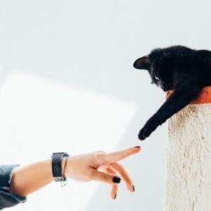 黒猫は本当に不吉な猫なの?大企業ヤマト運輸はなぜ黒猫を使ったのか