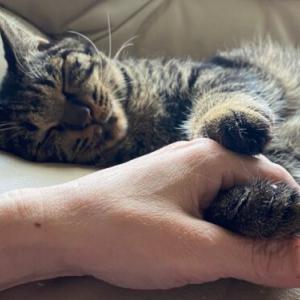 愛猫のために知っておきたい、覚えておきたい民法と動物愛護管理法