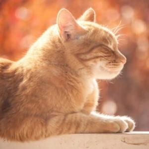 猫には秘められた不思議な力がある⁈猫のシックスセンスについて