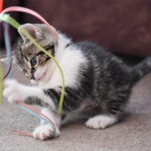 家の中って本当に安全なの⁈猫が口にすると危険な生活用品は【1】