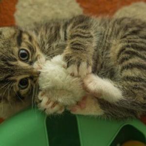家の中って本当に安全なの⁈猫が口にすると危険な生活用品は【2】