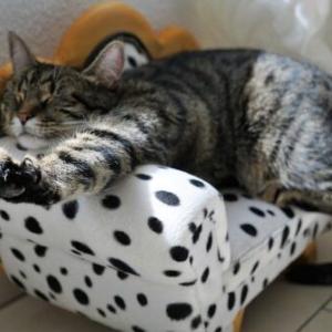 愛猫が快適に過ごせる⁉️ネットショップで人気の猫グッズ