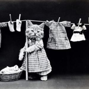 愛猫の体調不良は洗濯物の部屋干しが原因かも⁈その理由と注意点