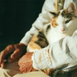 猫が最も影響を受けやすい⁈愛猫に忍び寄る危険な三次喫煙とは