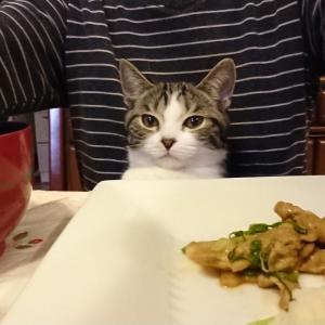 ボクも食べたいんだもん