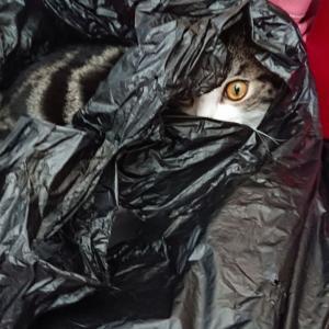 ゴミ袋漁りパート2