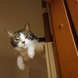 猫が飼い主をバカにしているとき…