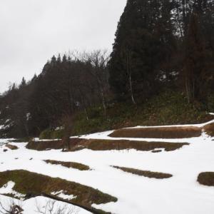 積雪も雨で消え、また降雪の気配に