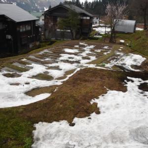 久々の荒天に、雪消えが進み