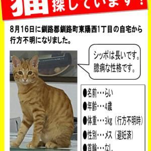 釧路町の迷子猫を探しています。