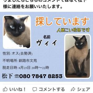 釧路市文苑の猫を探しています