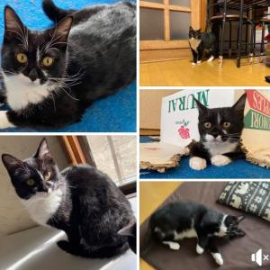 釧路市鶴野の迷い猫を探しています!
