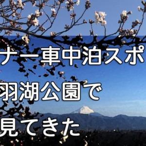 マイナー車中泊スポット「矢木羽湖公園」で桜を見る