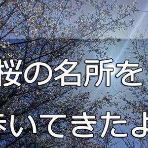 隠れた桜の名所を歩いてきたよ