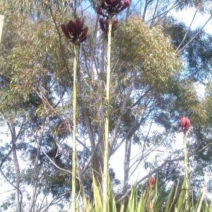 散歩路のワイルドライフ(植物)
